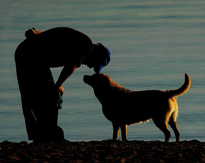 A True Friendship – Training Your Dog for Loyalty and Obedience